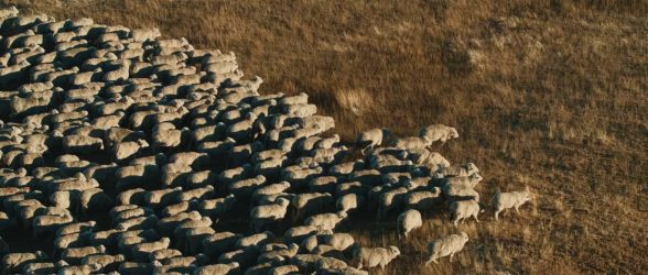 """A flock of sheep crosses the frame in Patagonia - Still frame from the documentary """"Land of The Wind"""""""
