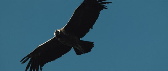 """A condor flying high over the Patagonian sky - Still frame from the documentary """"Land of The Wind"""""""