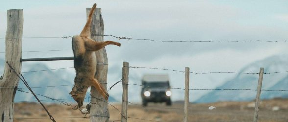 """A dead fox hangs from a fence post in the wild lands of Patagonia - Still frame from the documentary """"Land of The Wind"""""""