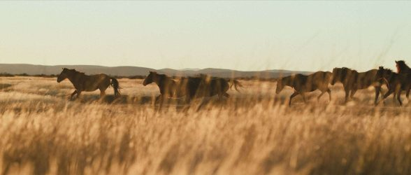"""Wild horses gallop in front of the camera under beautiful Patagonian light - Still frame from the documentary """"Land of The Wind"""""""